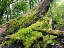 Mousse sur le bois de construction Photo libre de droits