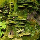 Mousse sur le bois mort Image libre de droits