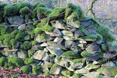 Mousse sur le mur de pierres sèches Photo libre de droits