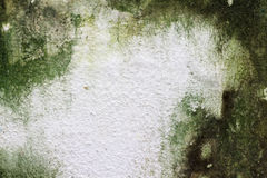 Mousse sur le mur en béton Image stock