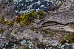 Mousse sur le mur en pierre Photographie stock libre de droits