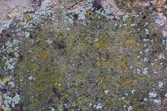 Mousse sur le mur en pierre Image libre de droits