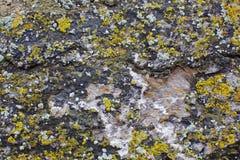 Mousse sur le mur en pierre Photos stock