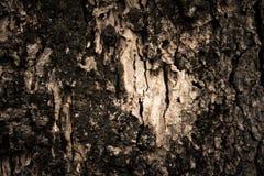 Mousse sur le tronc Photo stock