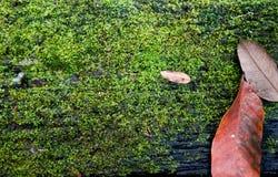 Mousse sur le vieux bois de planche image libre de droits