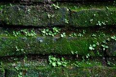 Mousse sur le vieux mur de briques Photographie stock