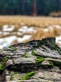 Mousse sur morts et arbre tombé photo stock