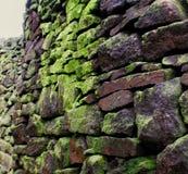 Mousse sur un mur en pierre Images stock