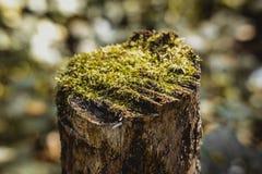 Mousse sur un tronçon d'arbre Photographie stock