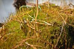 Mousse sur un tronçon de forêt Images stock