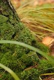 Mousse verte Image libre de droits