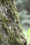 Mousse verte Photographie stock libre de droits