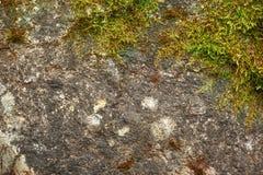Mousse verte avec le sol sec image libre de droits