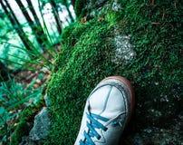Mousse verte dans le bois avec des espadrilles de sport Photographie stock