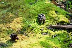 Mousse verte Le dessin-modèle de la nature image libre de droits