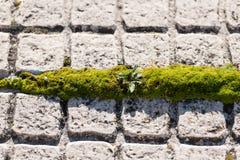 Mousse verte s'élevant dans l'espace entre les tuiles de deux étages à Caceres, Estrémadure, Espagne photographie stock