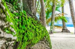 Mousse verte s'élevant sur l'écorce d'un arbre sur un islan inhabité Images libres de droits