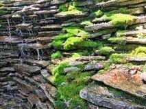 Mousse verte sur la caractéristique en pierre photographie stock