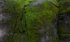 Mousse verte sur la roche Photographie stock