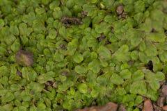 Mousse verte sur la texture de représentation au sol d'humidité images stock