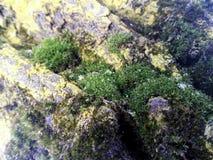 Mousse verte sur le bois photos stock