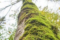 Feuille d 39 arbre sur le fond vert de mousse photo stock - Mousse sur les arbres ...