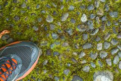 Mousse verte sur une vieille route en pierre Espadrilles en gros plan Image stock