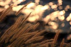 Mousserande ljus från floden Royaltyfri Foto