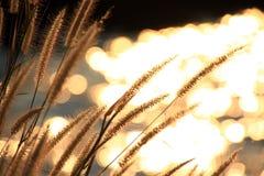 Mousserande ljus från floden Arkivbilder