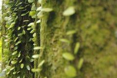 Mousses et lichen Image libre de droits