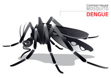 Moustique de dengue illustration libre de droits