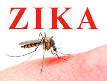 Moustique de virus de Zika Photographie stock