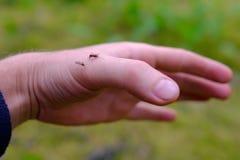Moustique mort en main photo libre de droits