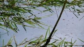 Moustiques au-dessus du marais