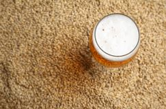Mout en bier Royalty-vrije Stock Foto's