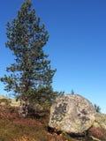 Moutain-δέντρο στοκ εικόνα με δικαίωμα ελεύθερης χρήσης