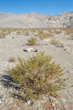 Moutain and bush around Racetrack playa Royalty Free Stock Photos