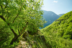 Moutain landscape on springtime Stock Photography