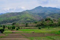 Moutain och fält i morgonen Royaltyfri Foto