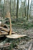 Moutain skog efter skördträ Royaltyfria Bilder