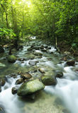 Moutain stream Royalty Free Stock Images