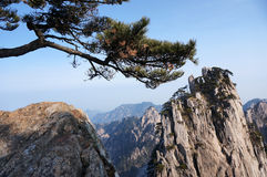 Mountain with tree. Yellow moutain of China, with typical pine tree Stock Photos