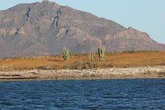 Moutains overzeese woestijncactus stock afbeeldingen