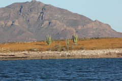 Moutains sea desert cactus Stock Images