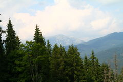 Moutains in summer, Ukraine Stock Photography
