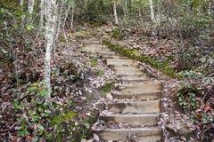 moutainside的木楼梯 库存图片