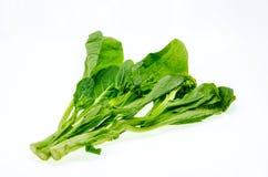 Moutarde verte fraîche sur le fond blanc (brassica juncea) Photos libres de droits