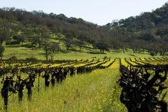 Moutardes dans la vigne Images libres de droits
