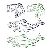 Mouth bass and trout set Stock Photography