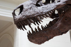 Mouth of Tyrannosaurus Rex Royalty Free Stock Photos